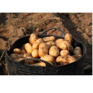 patata gallega nueva online